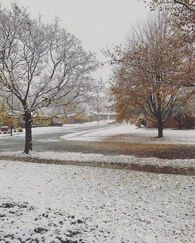 #fallsnowfall #snow #snowfall