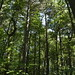 Notton Wood Nature Reserve (110)