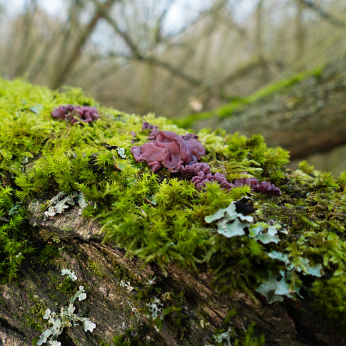 Jelly fungus, moss, lichen