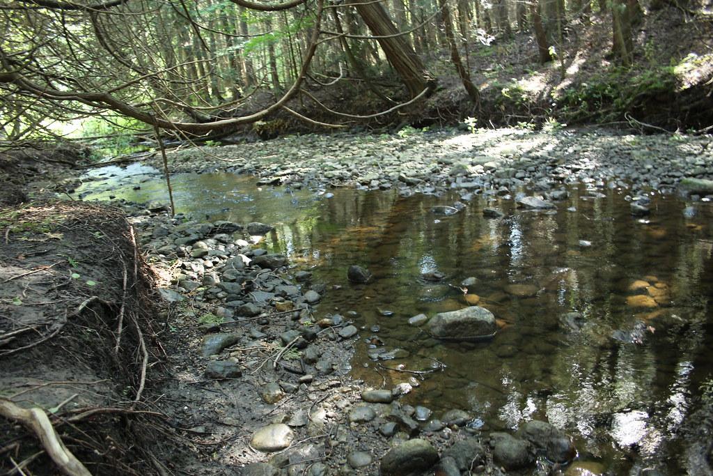 Scanlon Creek Conservation Area