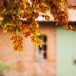 Herbst in Tarbek - Schleswig-Holstein - Deutschland