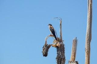 Bird in the desert