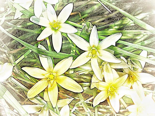Star of Bethlehem, Fujifilm FinePix HS10 HS11