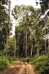 Road Mikongo Forest, Lope National Park in Gabon