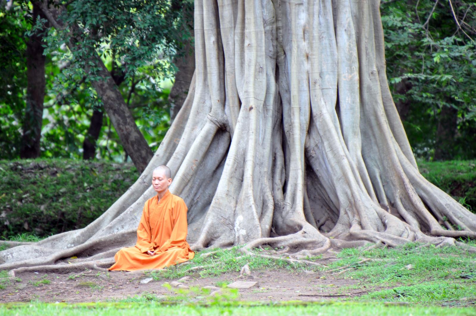 Visitar Polonnaruwa, la antigua capital de Sri Lanka visitar polonnaruwa - 39900930173 f7630a64df h - Visitar Polonnaruwa, la antigua capital de Sri Lanka