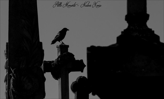 Raven on the Cross..., Canon EOS 1100D, Canon EF-S 55-250mm f/4-5.6 IS II
