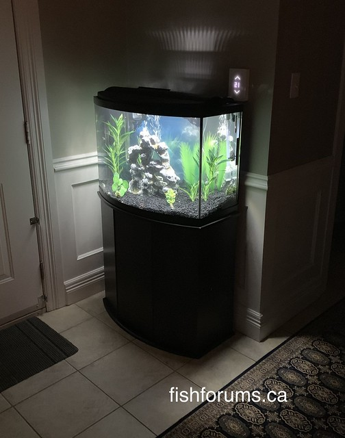 36 gallon bow front aquarium