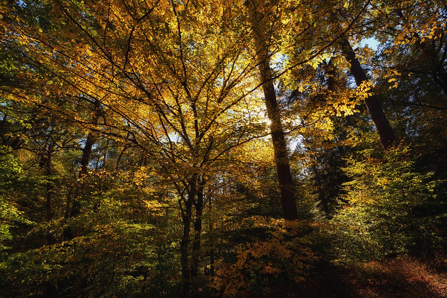 Lumière d'automne, Nikon D7200, Sigma 10-20mm F3.5 EX DC HSM