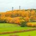 frodsham autumn colours