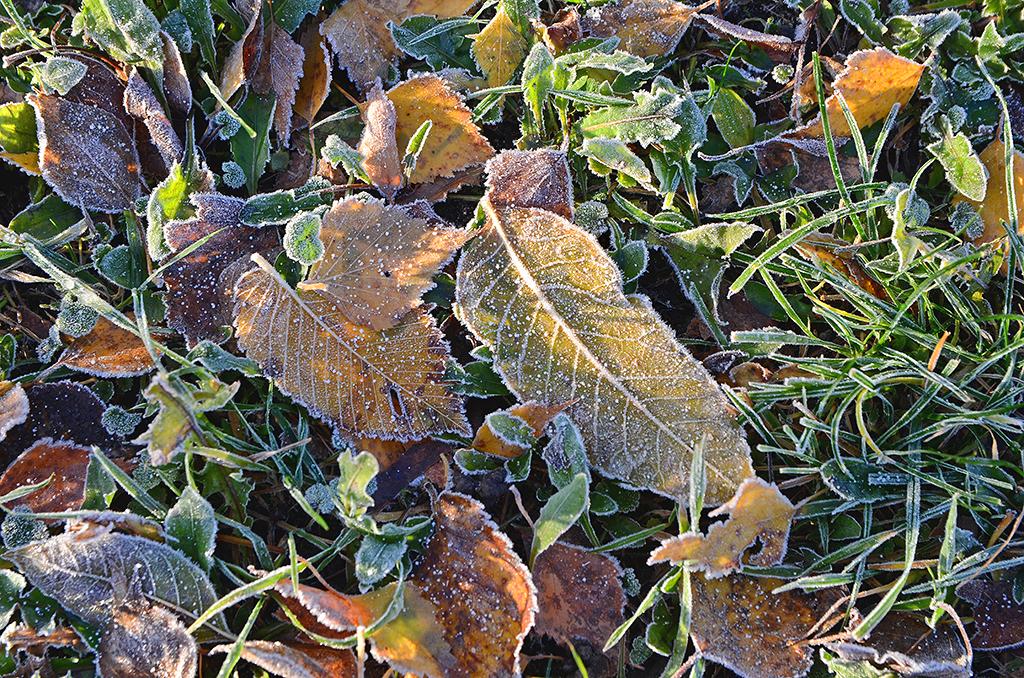 Winter's Breath 01