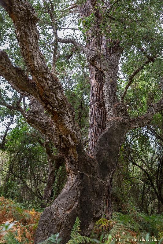 No abraces a los árboles les haces mucho daño... DEJA QUE SE ABRACEN ELLOS SOLOS