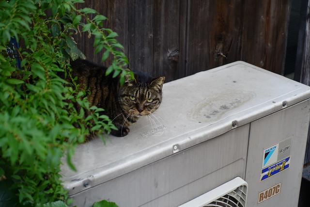 Today's Cat@2018-11-27