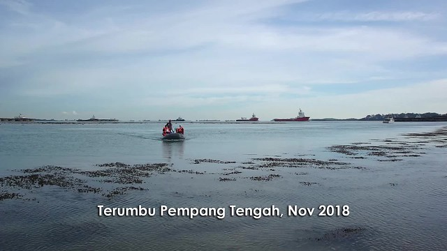 Living reefs of Terumbu Pempang Tengah, Nov 2018