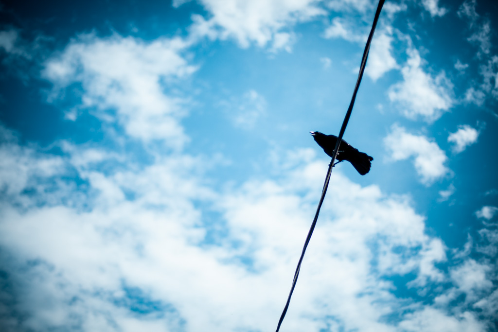 Crow on the line, Canon EOS 5D MARK II, Canon EF 50mm f/1.4 USM