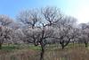 Photo:19n6497 By kimagurenote