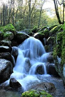 Agua y luz en el bosque