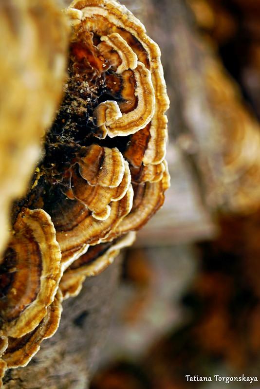 Древесные грибы на стволе поваленного бука