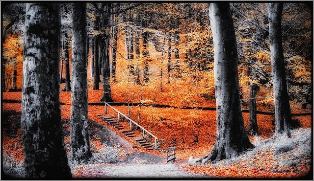 Autumn, Nikon D750, Sigma 70-300mm F4-5.6 APO DG Macro HSM