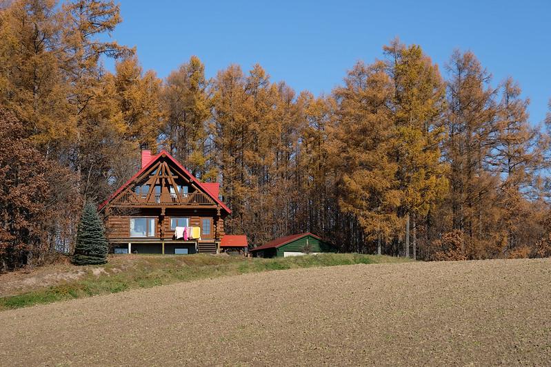 美瑛のカラマツ林とログハウス
