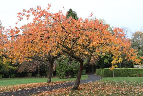 Gorgeous colours at Saltwell Park, Gateshead