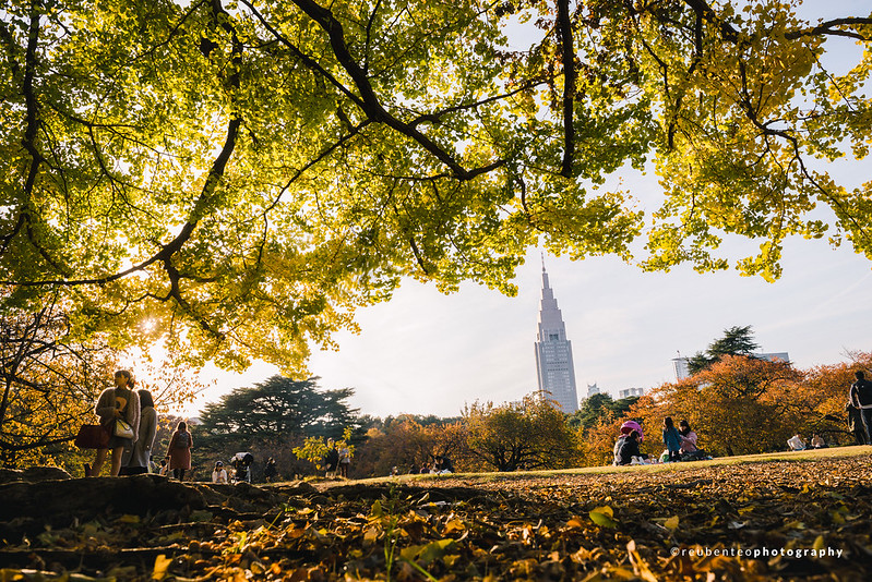 Autumn in Shinjuku