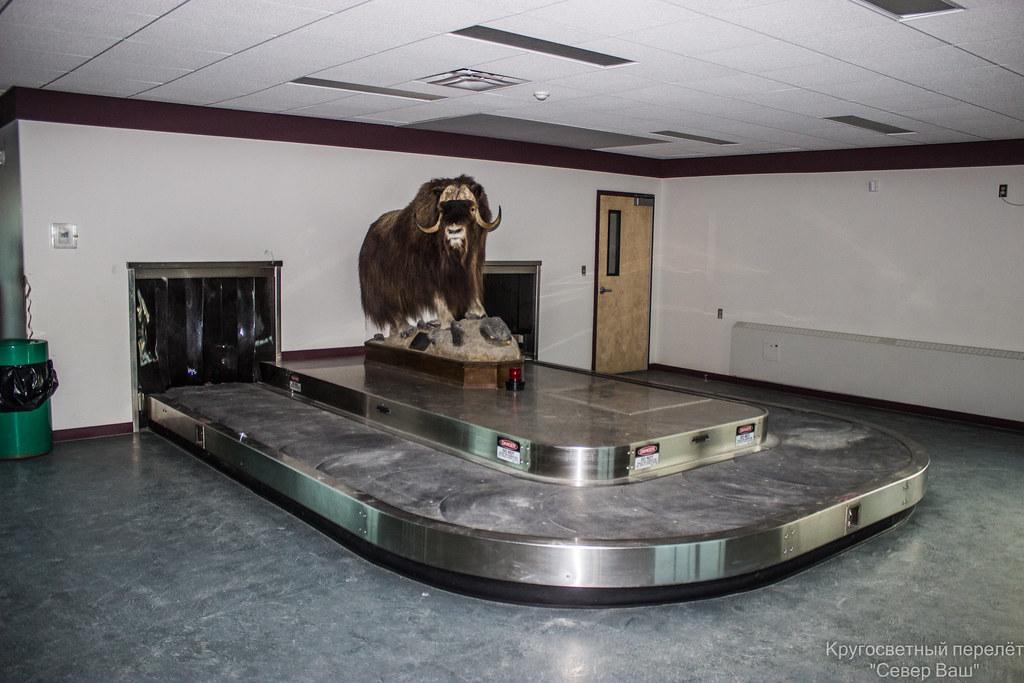 почему-то в Канаде в аэропортах на Севере часто можно встретить чучела местных зверей