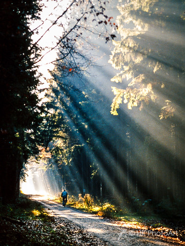 Into the Light