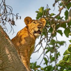 Taken in Uganda