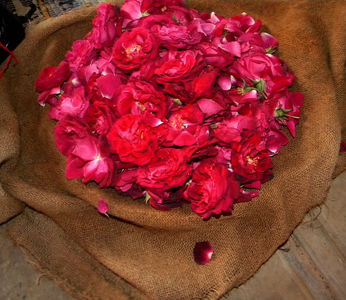 Rose petals in a burlap bag at Fatehpur Sikri, a mosque just outside of Agra, India
