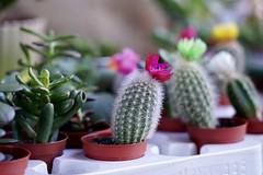 Botanics - Sony a7iii & 24-105 f4 G