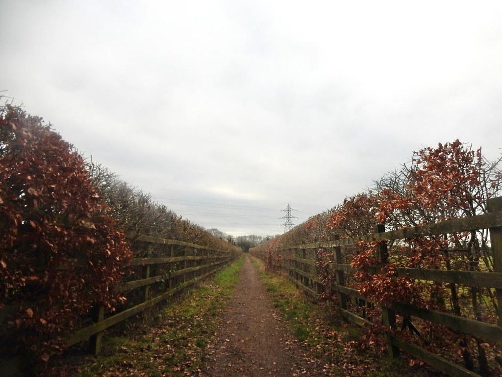 Between hedges Little Kimble to Saunderton