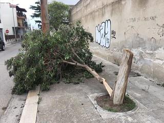 Danni vento a Casamassima (1)