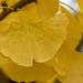 OK's Pics hat ein Foto gepostet:in Herbstfärbung