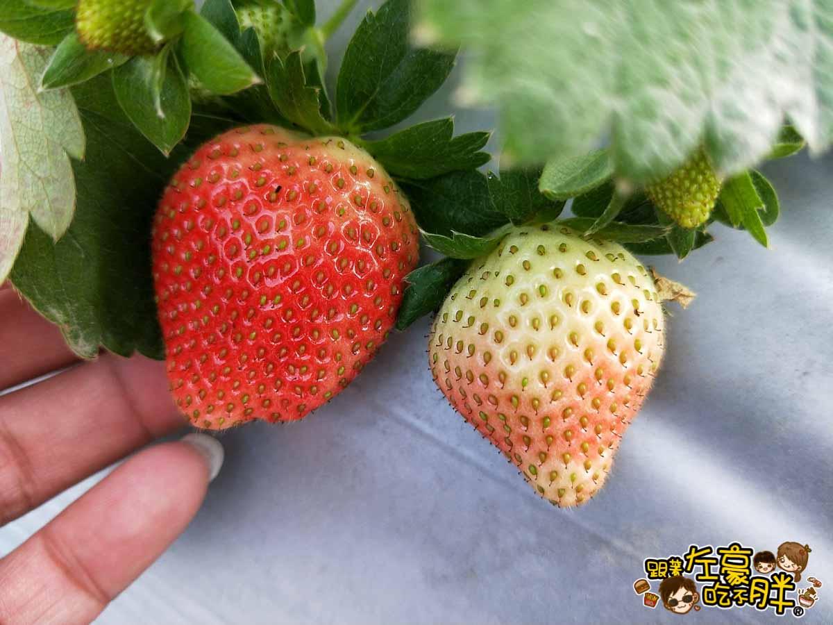 大岡山觀光草莓園-14