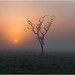 Foggy sunrise - Middle Point, Northern Territory, Australia by geoff.whalan