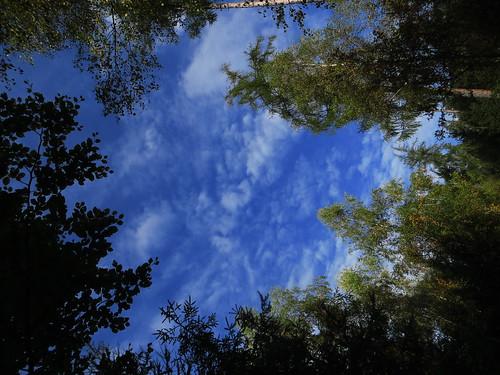 20170930 03 108 ostbay Wolken Herbst Wald Bäume