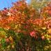 Autumnal Colours At Tonbridge Castle, Kent