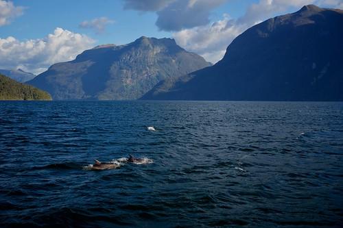 Doubtful Dolphins
