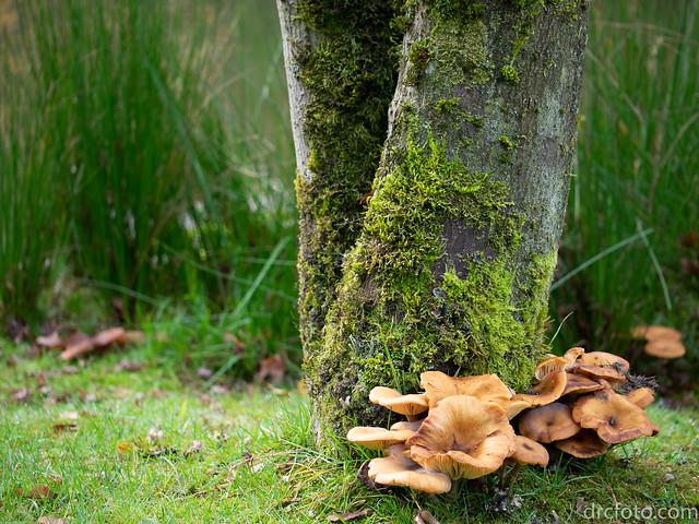 Fungus at base of, Olympus E-M1, Leica DG Macro-Elmarit 45mm F2.8 Asph. Mega OIS