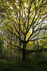 Holmwood Common-3