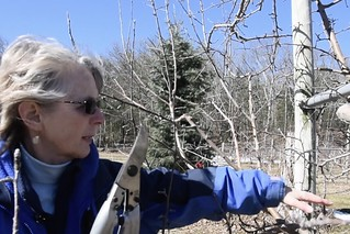 Concklin pruning 1