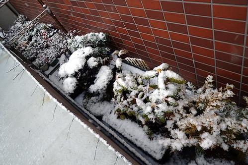 いよいよ雪