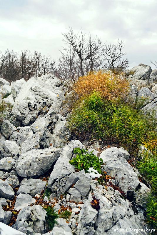 Среди камней на горе