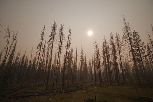 burnt deadtree forest forestfire landscape nature smoke sun travel trees