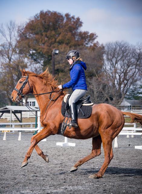 20181116 Austen's Ponies_23