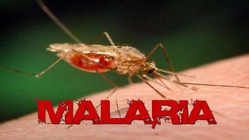Penyakit Malaria – Penyebab, Gejala, dan Bahayanya