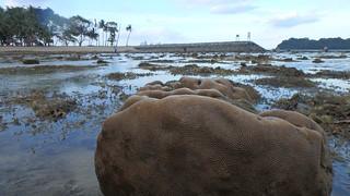 Living shores of Big Lagoon on Big Sisters Island