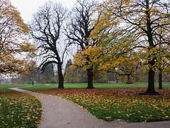 2014 11 London gardens edit