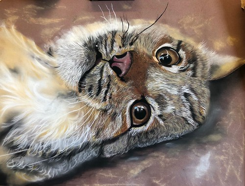I have been working on this little Lynx called Frisky in pastel on pastel Matt. Thank u Penny for use of yr amazing shots 😘  https://flic.kr/p/29e6q2g