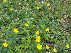 16-parkyellowflowers